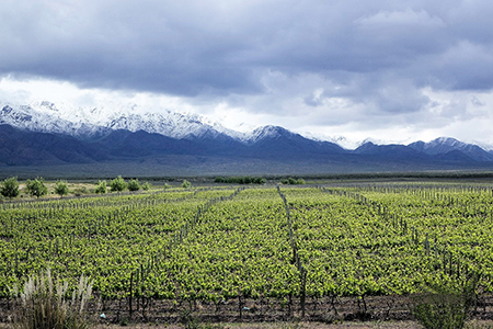 The vineyard offers a stunning panorama at the foot of the Andes