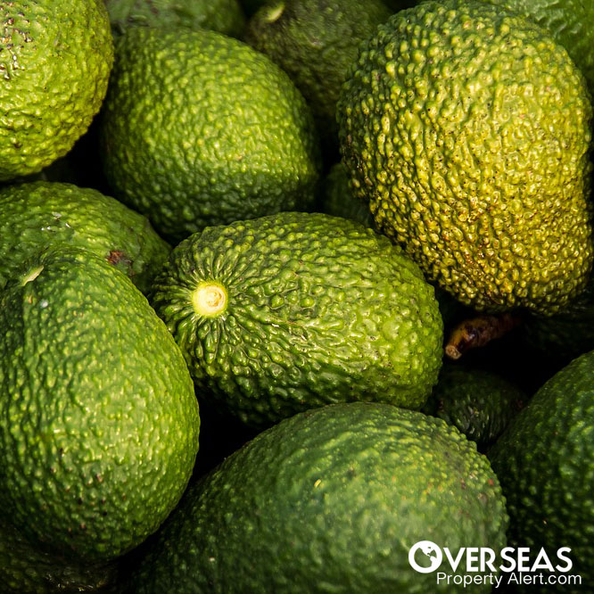 Avocados Offers Low-Risk, High Returns On Investment