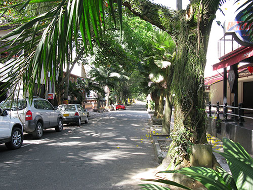 An abundance of cafés and restaurants hidden below the trees in El Poblado