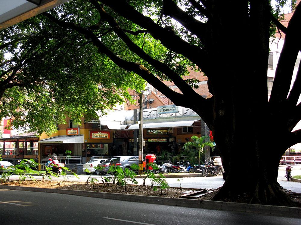 Laureles Shady Streets