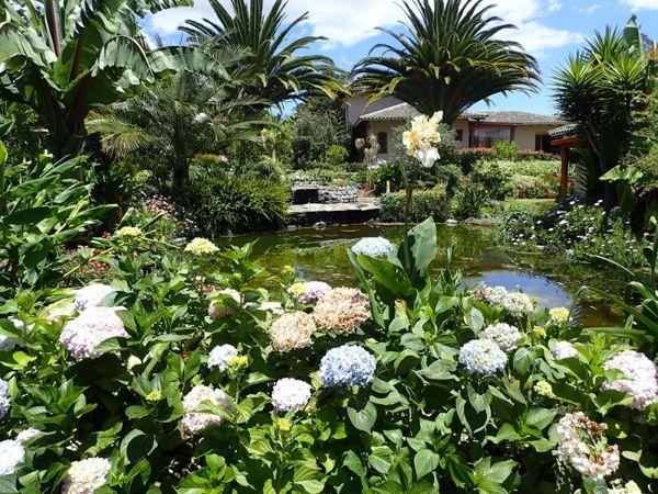 hydrangea pool